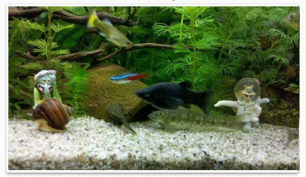 Aquarium Rio Juwel 180 Liter