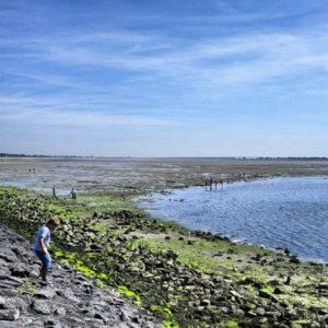 Bruinisse Krabbenstrand Wattenmeer Oosterschelde Zeeland Niederlande Holland