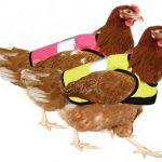 Doppelpack Warnweste für Hühner - Pink und Gelb Amazon