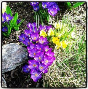 Frühling Rheinland Kleinenbroich