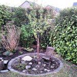 Garten Frühling Baum Mirabelle