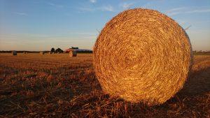 Getreide Stroh Ernte Kleinenbroich Niederrhein