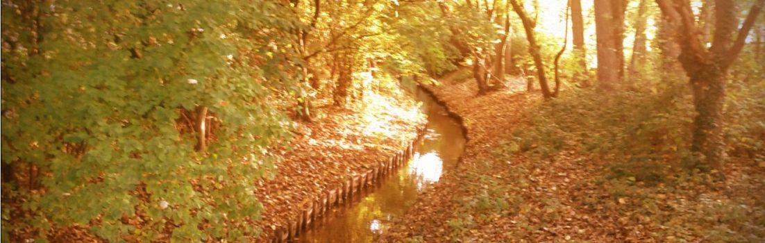 Herbstlaub Kleinenbroich Bach
