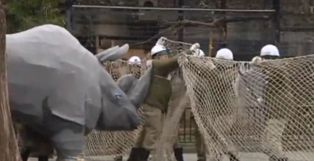 Police scrambled to deal with escaped papier mâché rhino YouTube - Nashorn Angriff Zoo Übung Japan kika Logo Nachrichten Nashorn