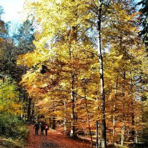 Tree Top Walk Baumkronenpfad Edersee Herbst 2013 Spaziergang Eichhörnchenpfad