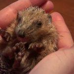 YouTube Drei kleine Igel Screenshot Little Hedgehogs YouTube