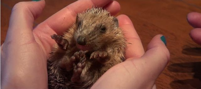 YouTube Drei kleine Igel Screenshot Little Hedgehogs  YouTube